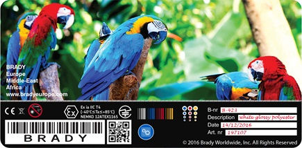 Sample Birds Glossy